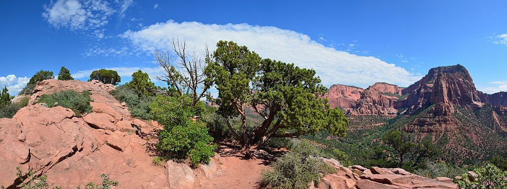 Trailende des Timber Creek Overlook Trails, Kolob Canyon, Zion National Park, UT
